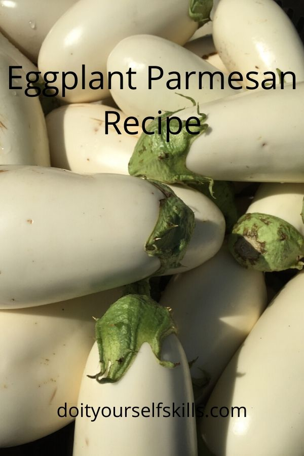 White eggplant to be used for making eggplant parmesan