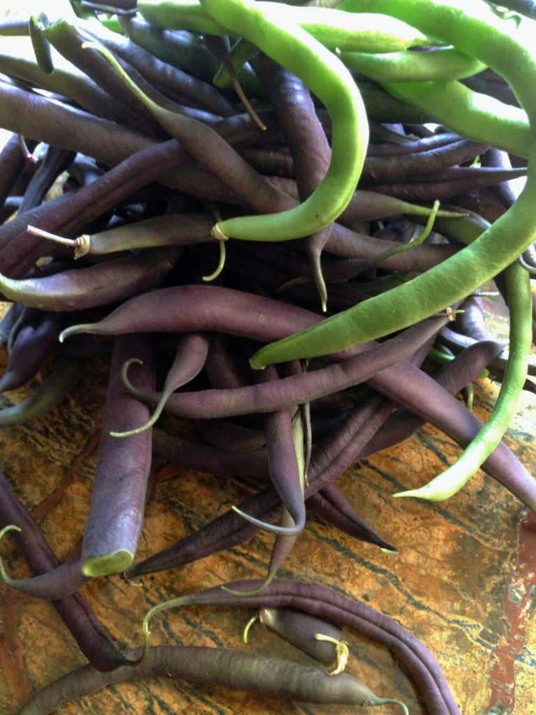 Purple and green string beans