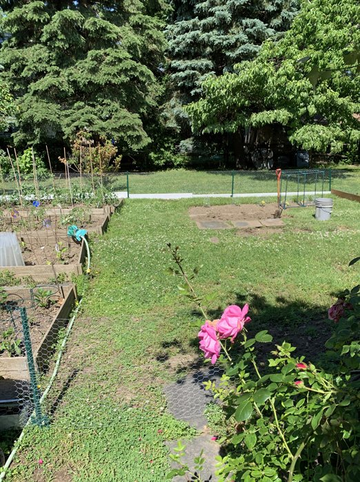 Vegetable garden surrounded by a 3' high chicken wire fence to deter the animals
