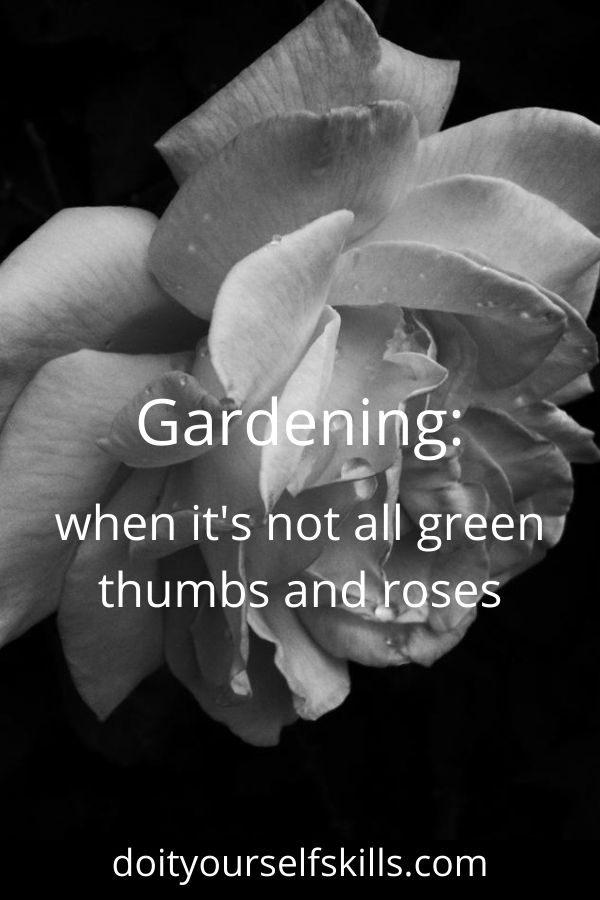 Black and white full blown Peace rose with text overlay of Gardening: when it's not all green thumbs and roses