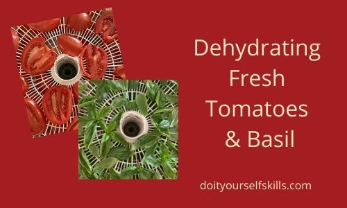Slices of fresh tomatoes and fresh basil leaves on a rack in the dehydrator