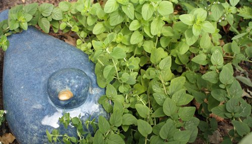 oregano plants in the herb garden against a cobalt blue, ceramic bird