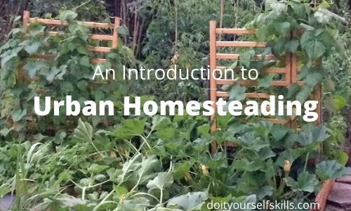 Vegetable garden with large squash plants and wooden trellis for cucumbers and beans to climb on